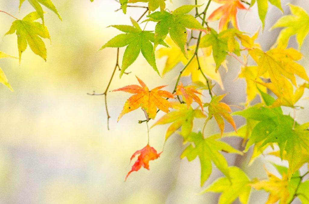 秋のゆらぎ肌について